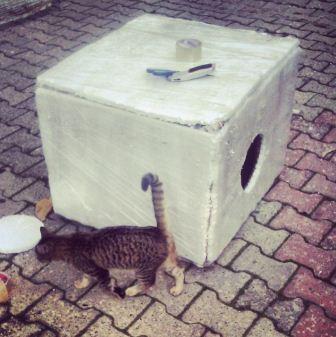Kediler için ev nasıl yapılır?-9