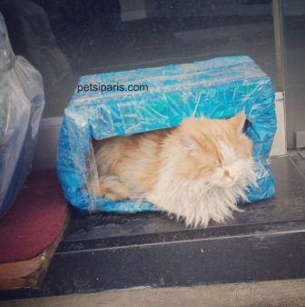 Kediler için ev nasıl yapılır?-5