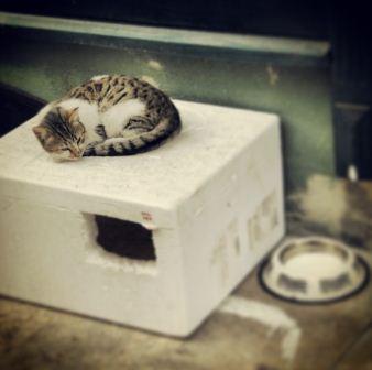 Kediler için ev nasıl yapılır?-8