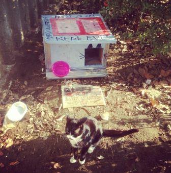Kediler için ev nasıl yapılır?-7