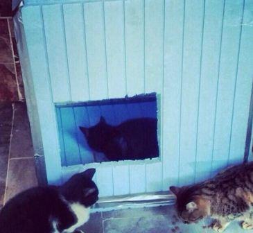 Kediler için ev nasıl yapılır?-14