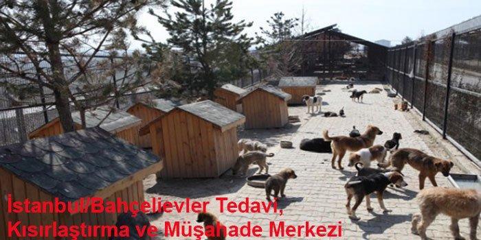 İstanbul'un 10 Hayvan Barınağı-1