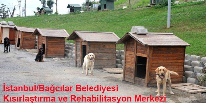İstanbul'un 10 Hayvan Barınağı-2