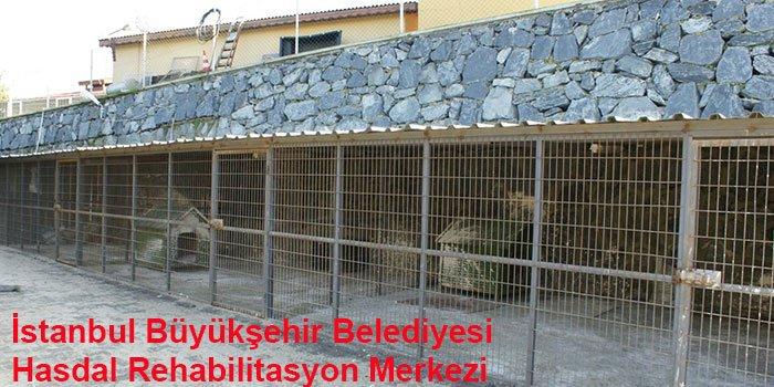 İstanbul'un 10 Hayvan Barınağı-4