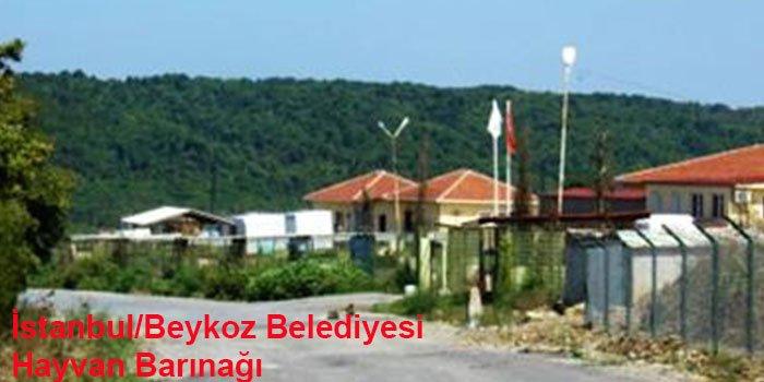 İstanbul'un 10 Hayvan Barınağı-8