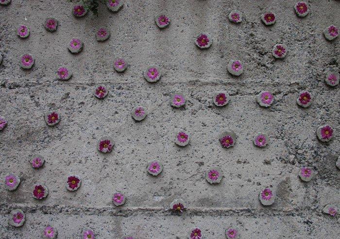 Balat'ta duvarlara çiçek açıyor!-10
