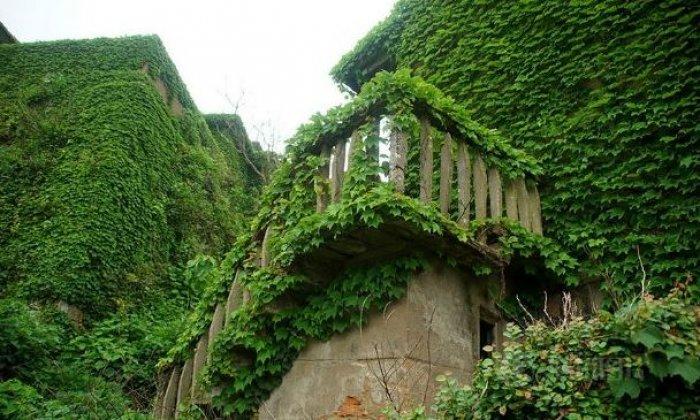 Shengsi; doğa ile yeşile boyanmış köy-4