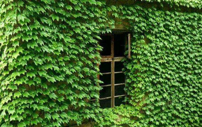 Shengsi; doğa ile yeşile boyanmış köy-6