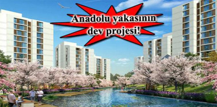 Resim İstanbul kumru şenliği düzenliyor!