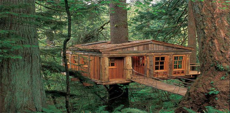 Bu ağaç evler dikkat çekiyor!