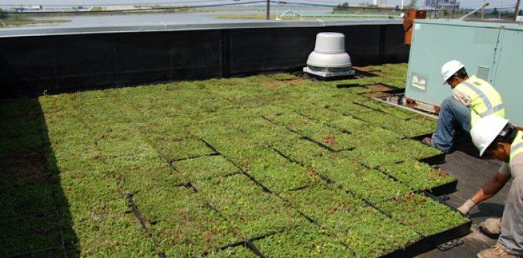 Yeşil çatı kongresi için geri sayım
