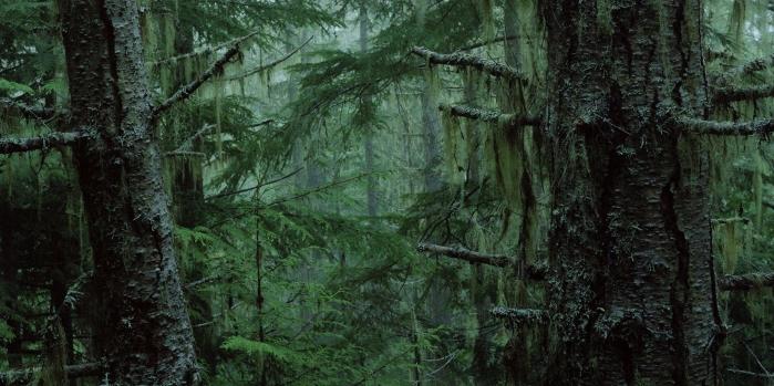 216 Bahar projesindeki asırlık ağaçlar ne olacak?