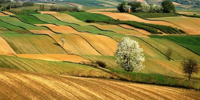 Hazinenin tarım arazileri satılıyor