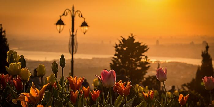 İstanbul lale festivali ne zaman