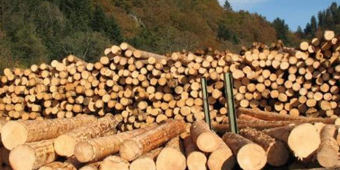 Orman ve ağaç ürünleri sektörü