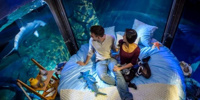 Köpek balıkları ortasında uyuma tecrübesi